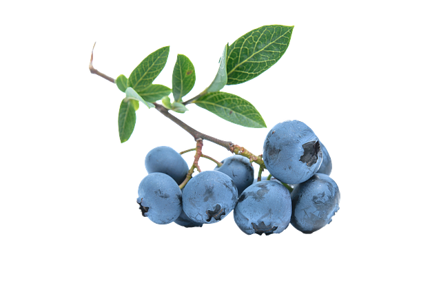 blueberry-539135_640
