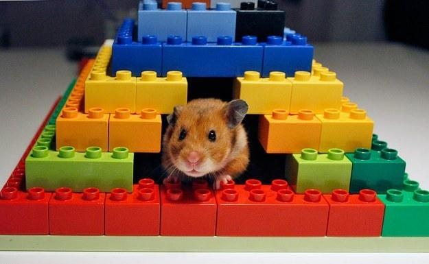 hamster-bloggen.blogspot.co.uk